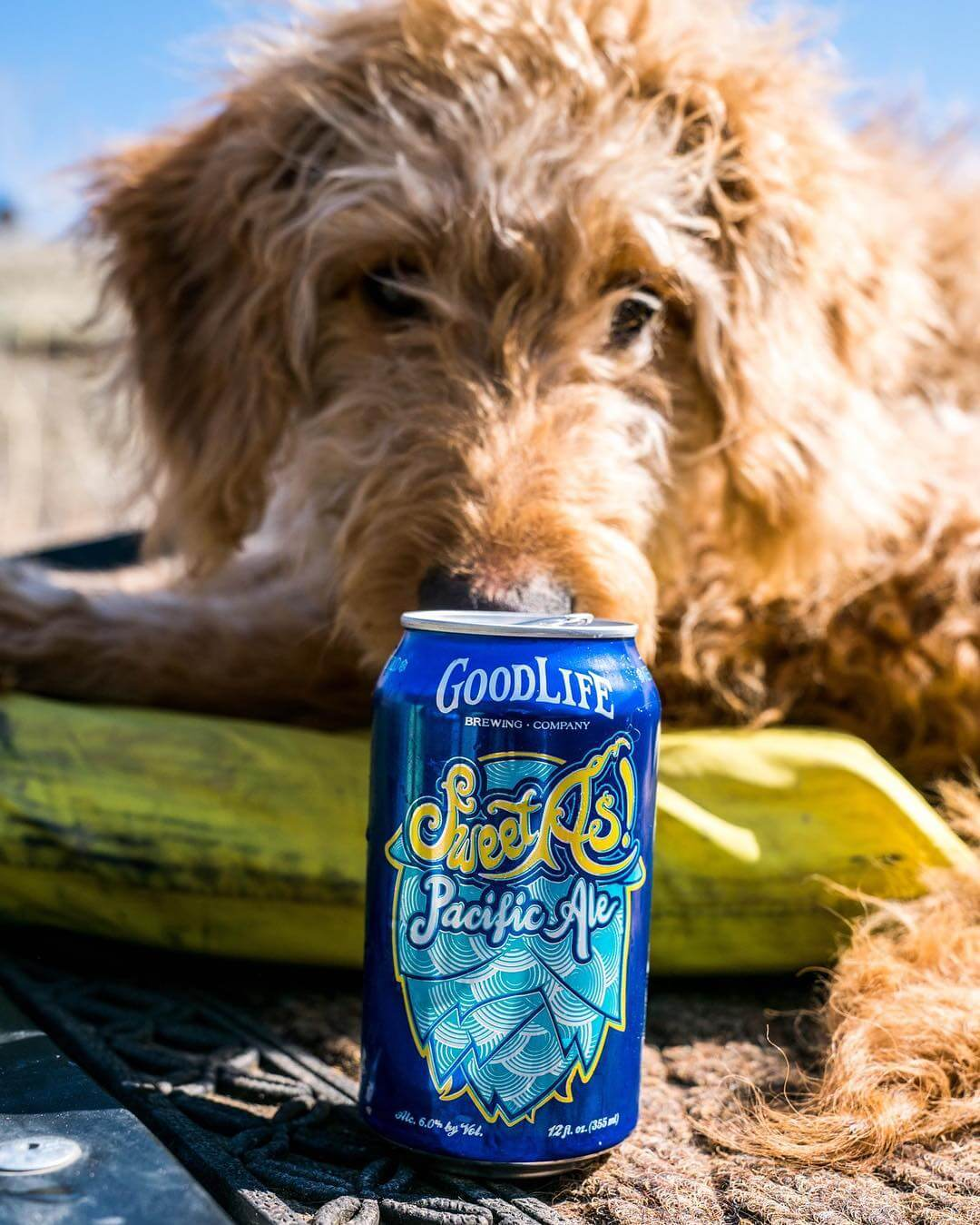 Fortunately for this guard dog it's the weekend! Be sure to make it a sweet as one! 📸: @bendflyguy #whatsyourgoodlife #sweetaspacificale