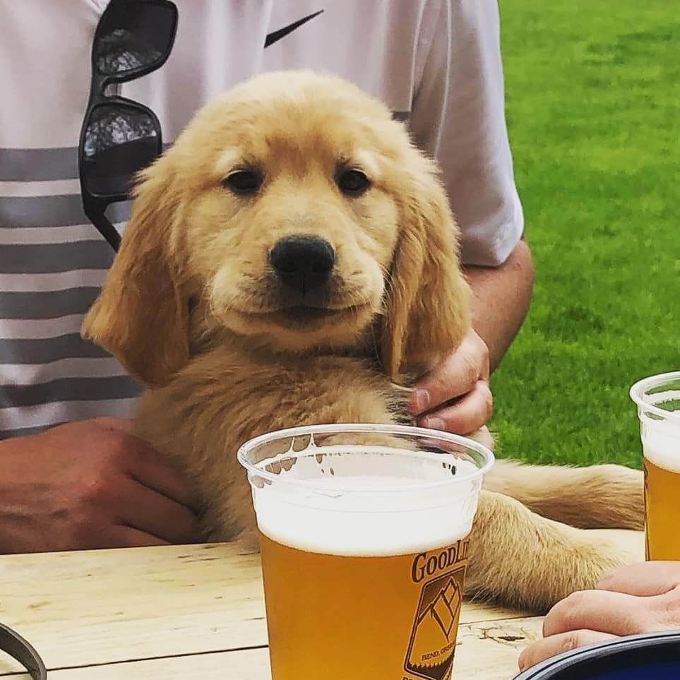 Oh Mrrr Grrrd its so FLUFFY!  The Beirgarten is a great place to enjoy a pint, good dogs welcome. 📷: @edgarsgoldenlifepdx